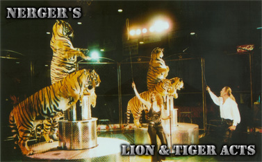 Nerger's Lion & Tiger Acts