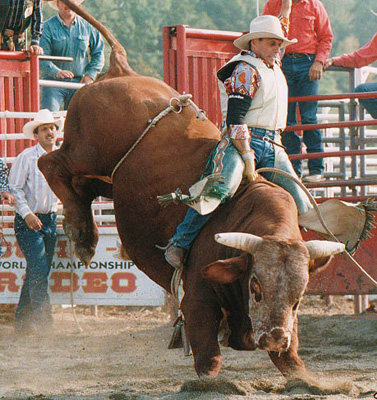 Professional Rodeo and Bull Riding